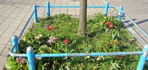 Schulhofbeet Frühjahr 2012